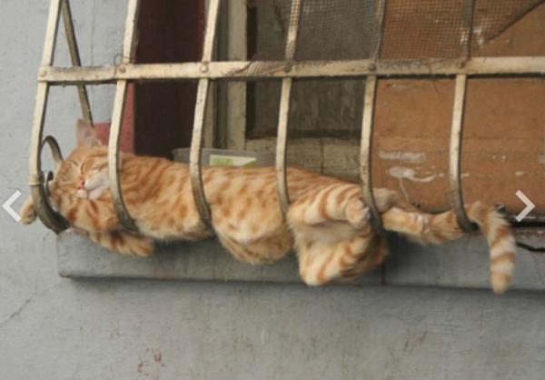 GALERIE - Kočičí spací gymnastika 1
