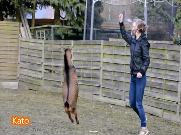 I koza se dá ochočit