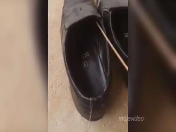 Překvapení v botě
