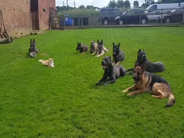 Dokonalý test psí poslušnosti na cvičáku