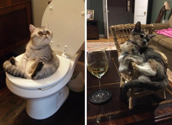 GALERIE - Naprosto úžasné kočky