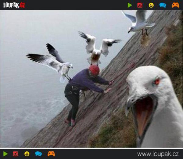 GALERIE - Ptačí nálety