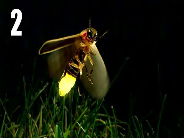 TOP 5 - Neuvěřitelní zástupci hmyzu