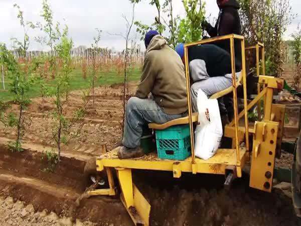 Efektní sázení stromků