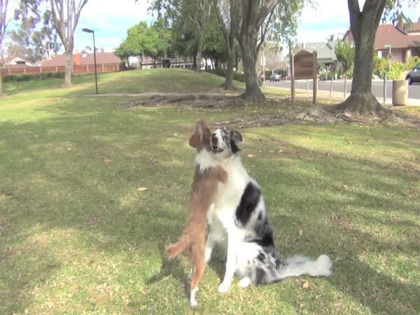 Úžasně vycvičení psi