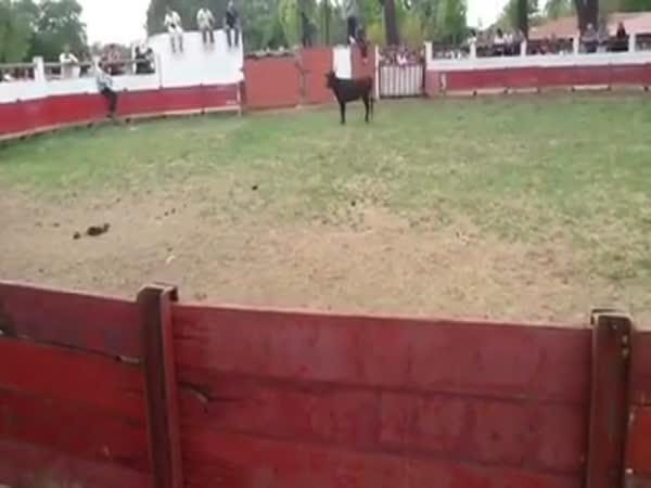 Idiot - Provokovat býka se nevyplácí