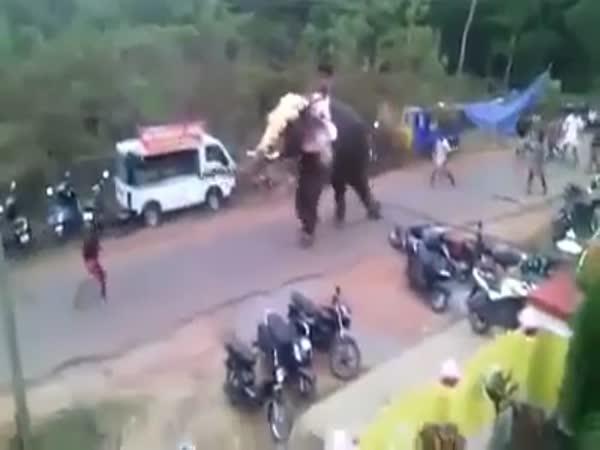 Když se slon rozzlobí