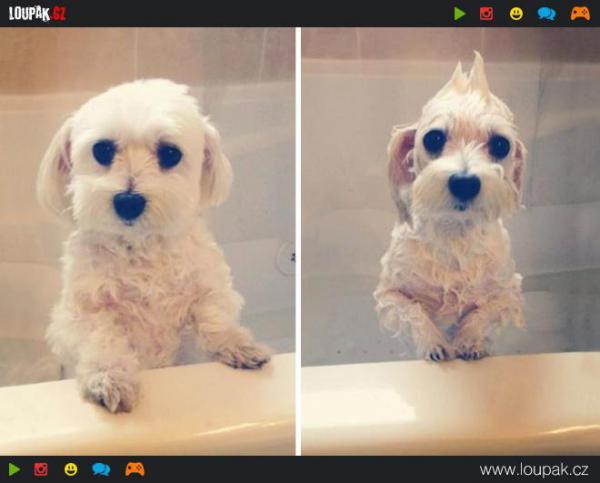 GALERIE - Pejsci před a po koupeli