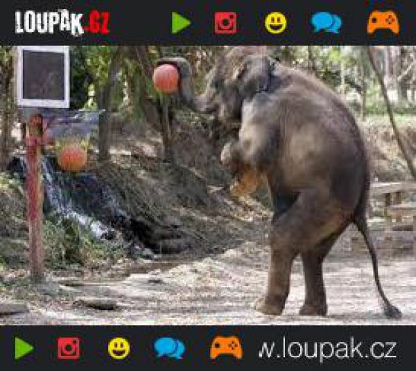 GALERIE - Sloni se smyslem pro humor