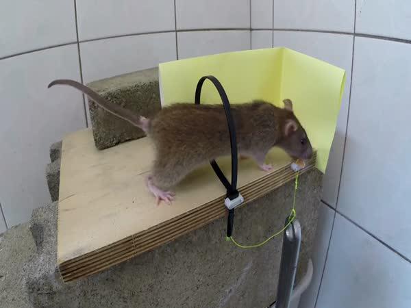 Návod - Past na potkany