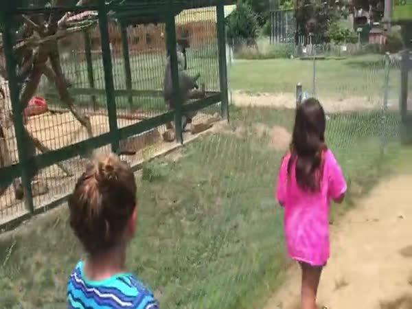 Provokovat paviány se nemá