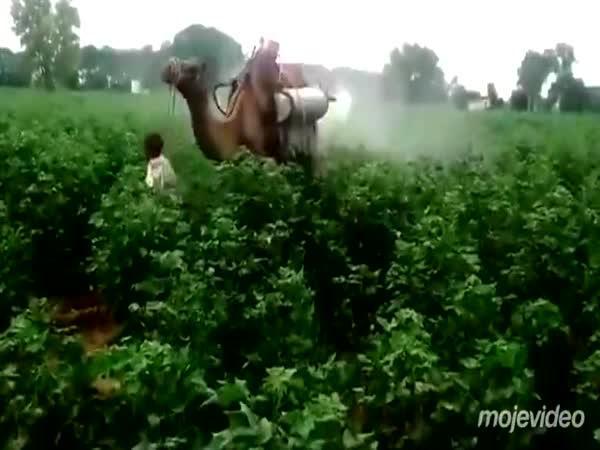 Moderní postřikovač v Pakistánu