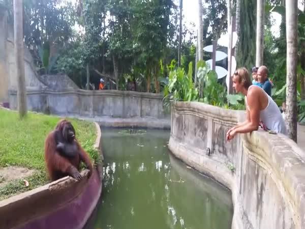 Orangutan co smlouvá