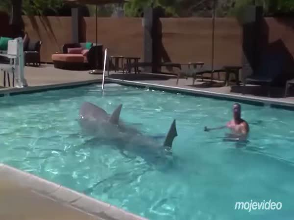 Hrozba pro plavce