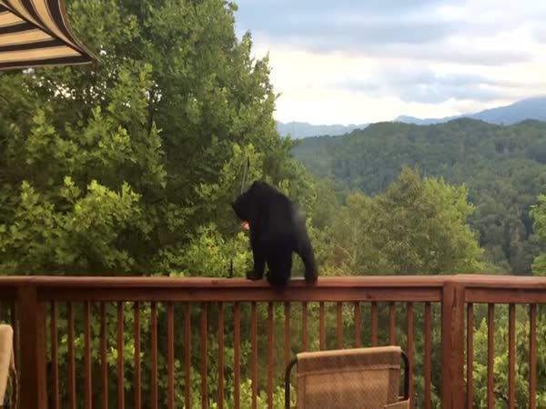 Medvěd si hraje na ptáka
