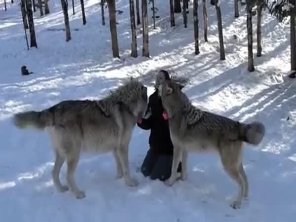 Na návštěvě u vlků