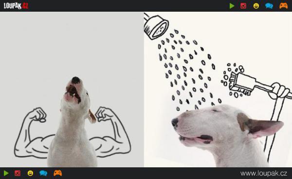 GALERIE - Vtipné ilustrace s Bulteriérem