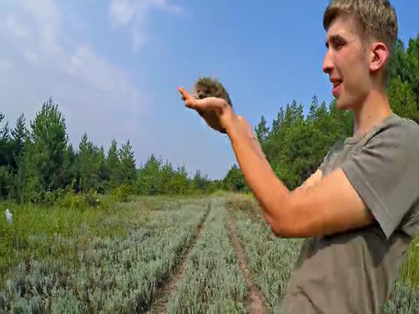 Jak dostat ježka z klubíčka?