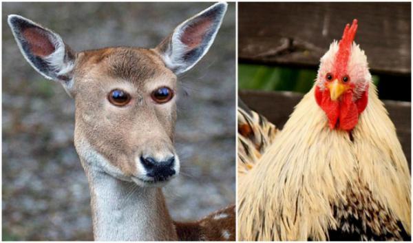 GALERIE - Zvířata s lidskýma očima