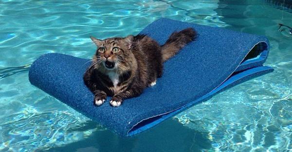 GALERIE - Zoufalé kočky v pasti