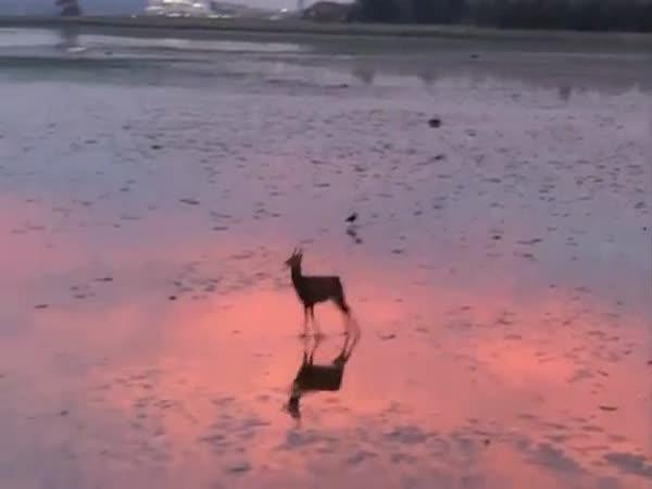 Ranní procházka po pláži (Anglie)