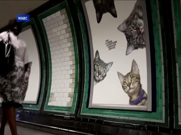 Kočičí fotky ovládly londýnské metro!