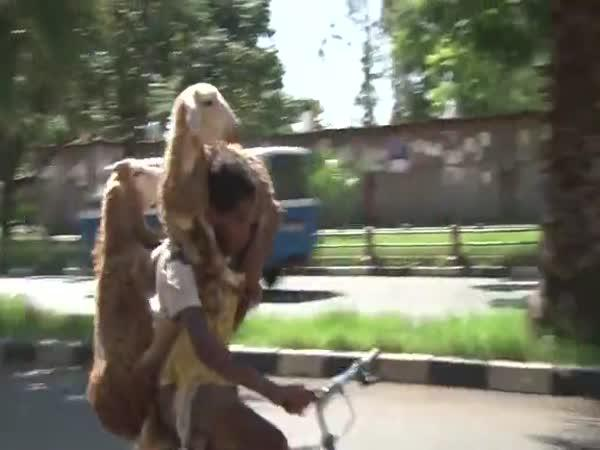 Etiopie - Jak přepravit ovce domů?
