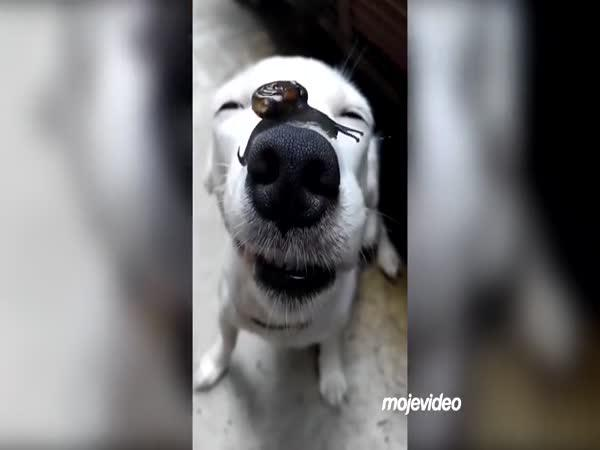 Pes, kterému nic nevadí