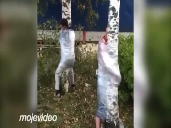 Opilci mají rádi stromy
