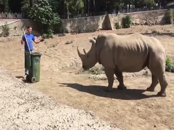 Umírněný nosorožec
