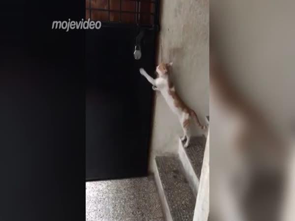 Velmi chytrá kočka