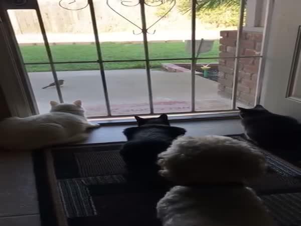 Pes smrtelně vyděsil lovící kočky