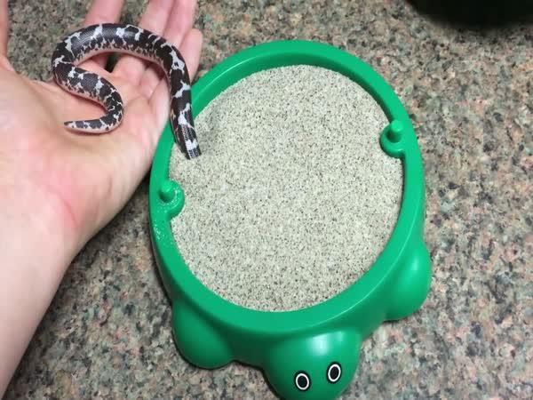 Malý hádek miluje písek