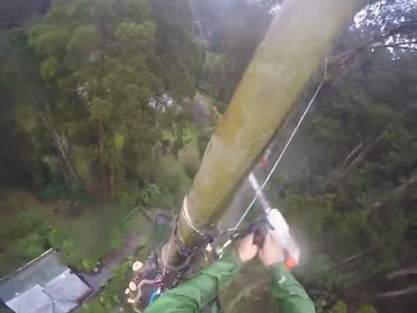 Profesionální kácení 50m stromu