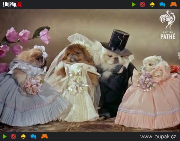 GALERIE - Psí svatby
