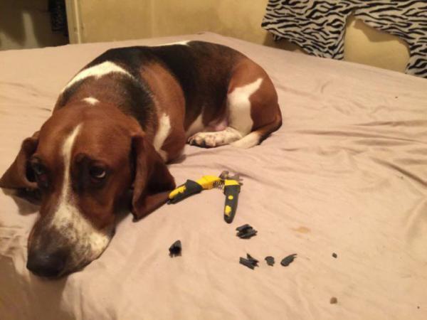 GALERIE - Psi vědí, když něco provedli špatně