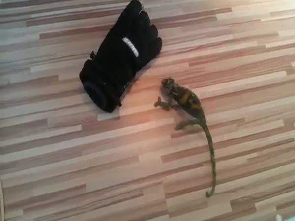 Chameleon agresor