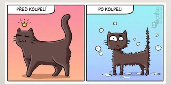 GALERIE - Kočičí komiksy