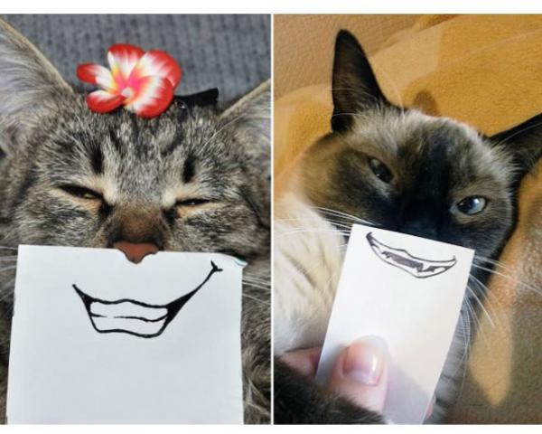 GALERIE - Smajlíková výzva koček