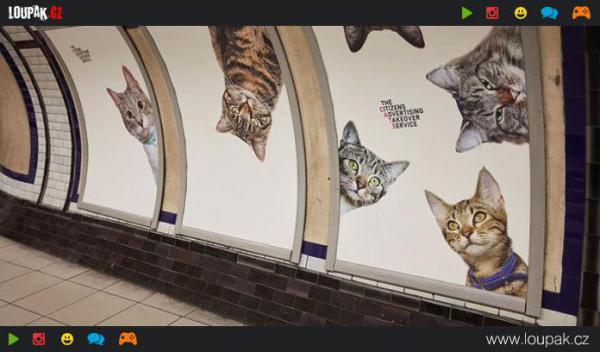 GALERIE - Kočky v metru místo reklam