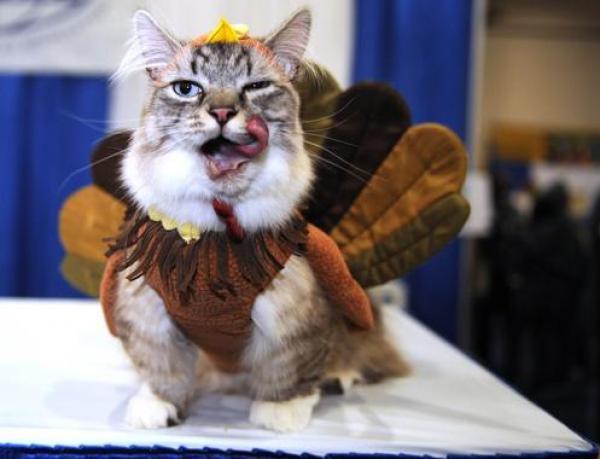 GALERIE - Krocan, nebo kočka?