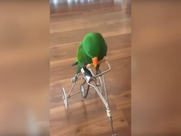 Papoušek jezdí na kole
