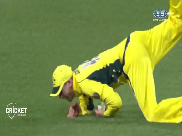 Kriket - Parádní chycení míčku