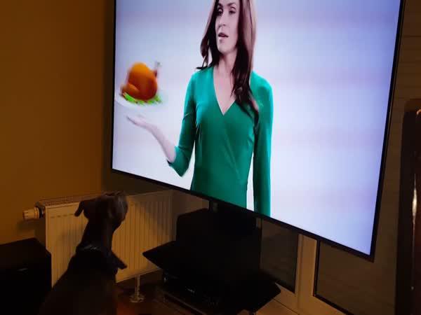 Pes si myslí, že televize je okno
