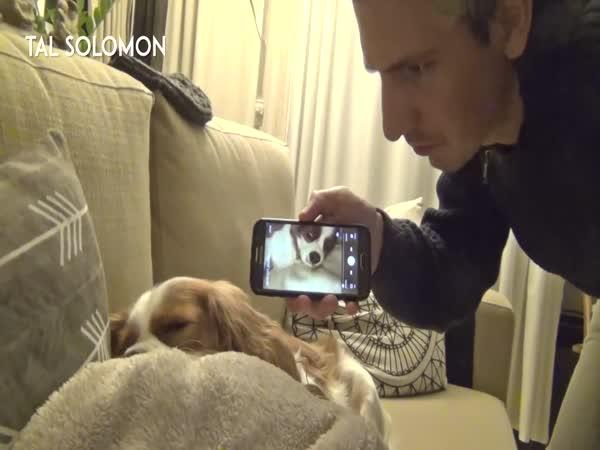 Jak odnaučit psa chrápat