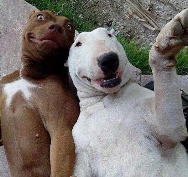 GALERIE - Zvířecí selfie
