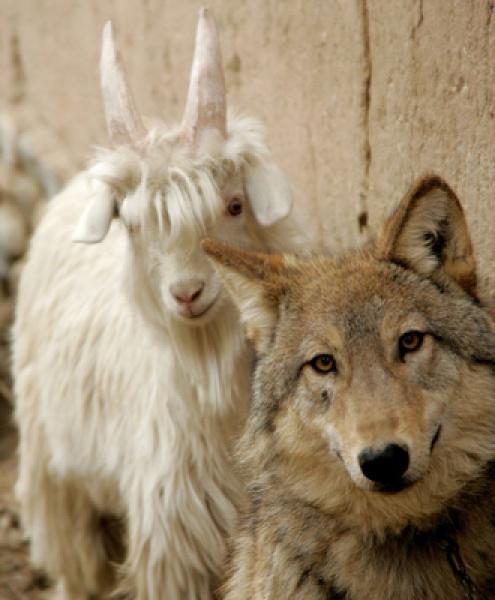 GALERIE - Přátelství mezi zvířaty