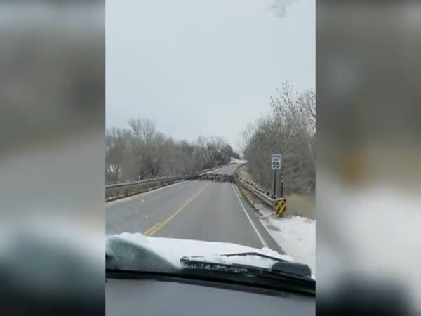Špatný odhad - ptáci na silnici
