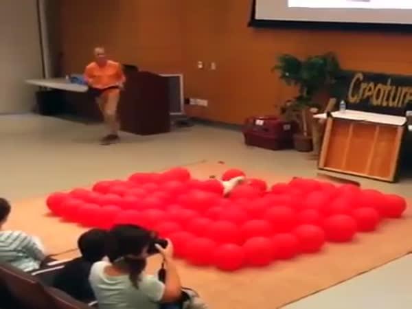 Pes překonal rekord v praskání balonků