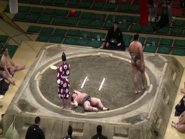 Knockout v SUMO